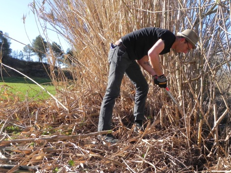 We began cutting the canes that grow along a ditch and around an old brick building.