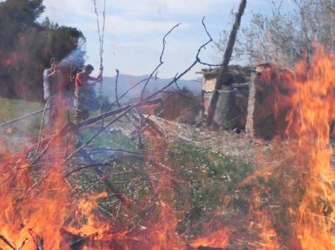 Burning canes